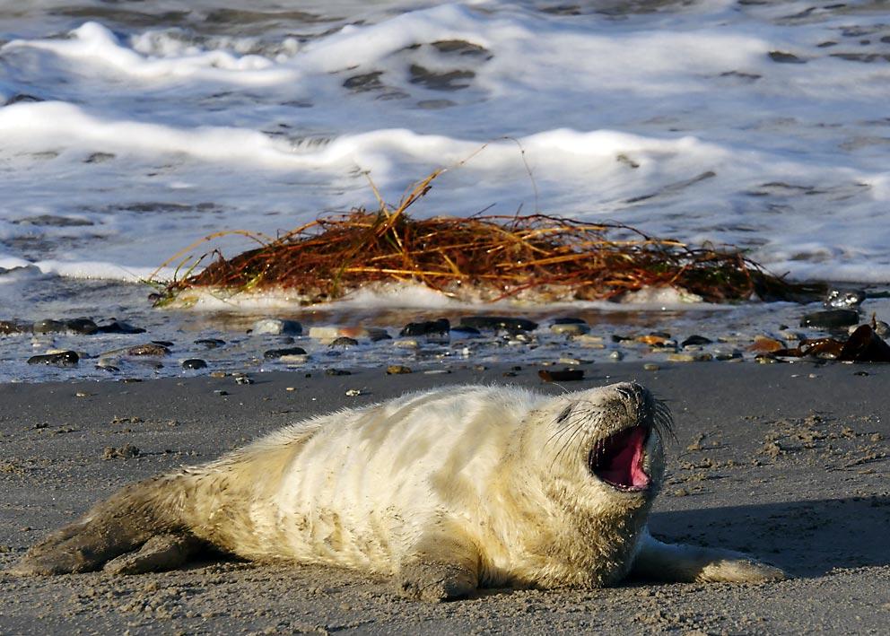 Lärmende Kinder? Nicht bei Robben | Bild: Andreas Bubrowski
