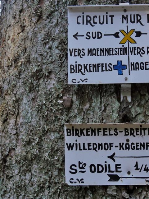 Rundgang Heidenmauer | Foto: Andreas Bubrowski